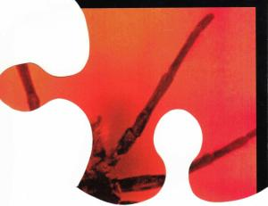 1999-ragnodoro tesserapuzzle3 1999 p1 i01