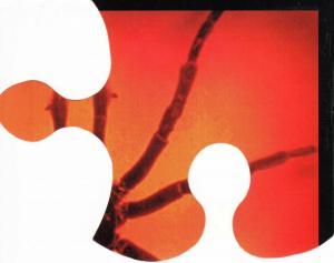 1999-ragnodoro tesserapuzzle4 1999 p1 i01